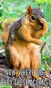 crazy squirrels download