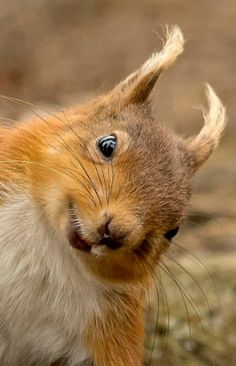 funny squirrel 23d5f9868f7d76c79c49bef53ae08f7f--squirrel-funny-red-squirrel