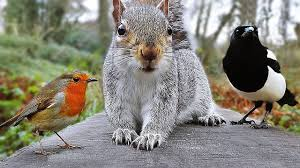 squirrel n friends images